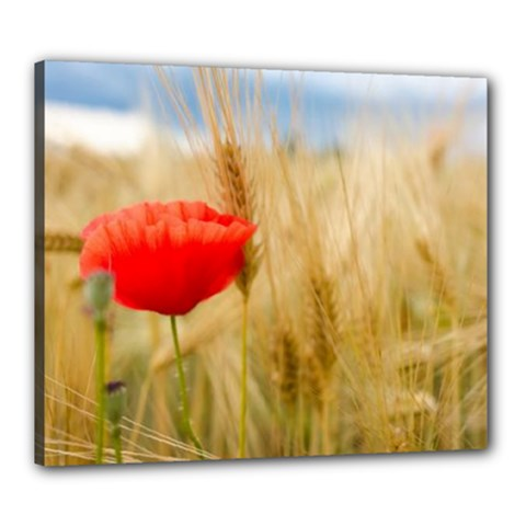 Red Poppy Canvas 24  X 20  (framed) by Fadi2010