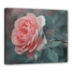 Peach Rose Canvas 24  x 20  (Framed)