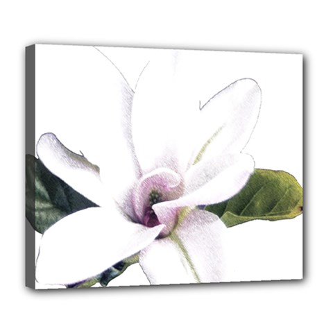 White Magnolia Pencil Drawing Art Deluxe Canvas 24  X 20   by picsaspassion