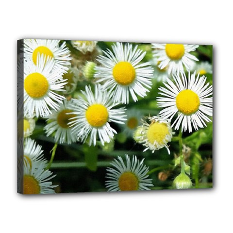 White Summer Flowers Oil Painting Art Canvas 16  X 12  by picsaspassion