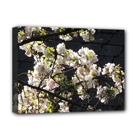 Japanese Cherry Blossom Deluxe Canvas 16  X 12   by picsaspassion