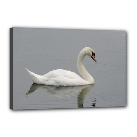 Swimming white Swan Canvas 18  x 12  by picsaspassion