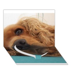 Red English Cocker Spaniel 2 Heart Bottom 3D Greeting Card (7x5) by TailWags
