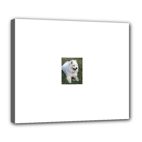 Samoyed Laying In Grass Deluxe Canvas 24  x 20   by TailWags