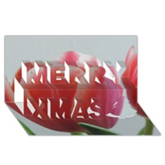 Red   White Tulip Flower Merry Xmas 3d Greeting Card (8x4) by picsaspassion
