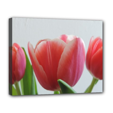 Red Tulips Canvas 14  X 11  by picsaspassion