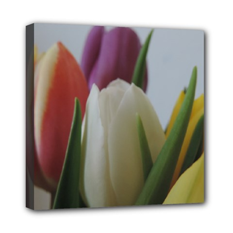 Colored By Tulips Mini Canvas 8  X 8  by picsaspassion