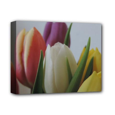 Colored By Tulips Deluxe Canvas 14  X 11  by picsaspassion