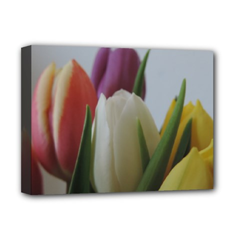 Colored By Tulips Deluxe Canvas 16  X 12   by picsaspassion