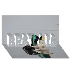 Swimming Duck Best Sis 3d Greeting Card (8x4) by picsaspassion