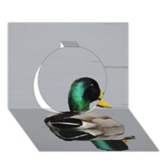 Swimming Duck Circle 3D Greeting Card (7x5) by picsaspassion