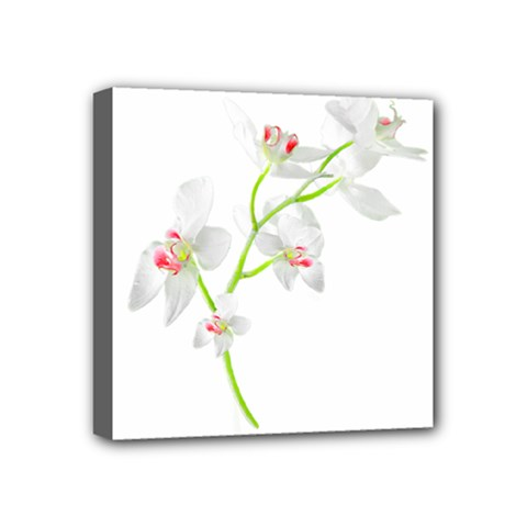 Isolated Orquideas Blossom Mini Canvas 4  X 4  by dflcprints