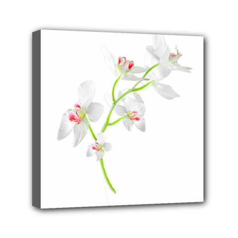 Isolated Orquideas Blossom Mini Canvas 6  X 6  by dflcprints