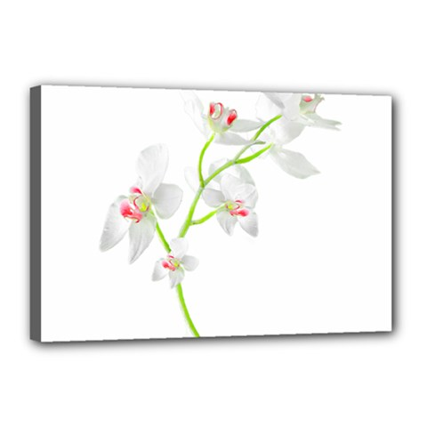 Isolated Orquideas Blossom Canvas 18  X 12  by dflcprints