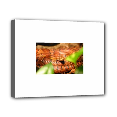 Sunkissed Corn Snake Canvas 10  X 8  by TailWags