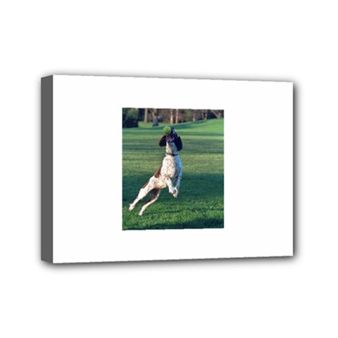 English Springer Catching Ball Mini Canvas 7  x 5  by TailWags