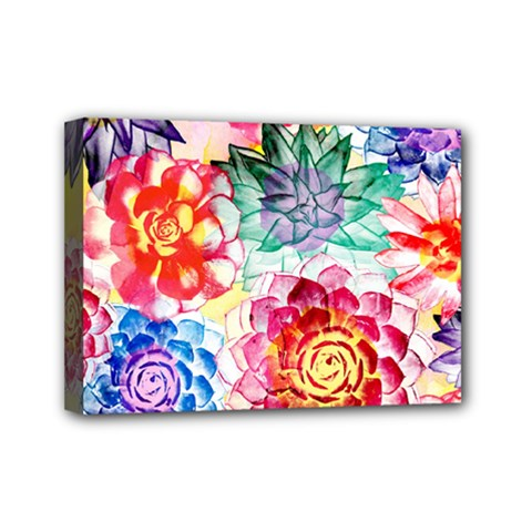 Colorful Succulents Mini Canvas 7  X 5  by DanaeStudio