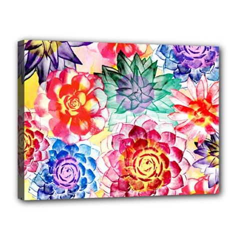 Colorful Succulents Canvas 16  X 12  by DanaeStudio