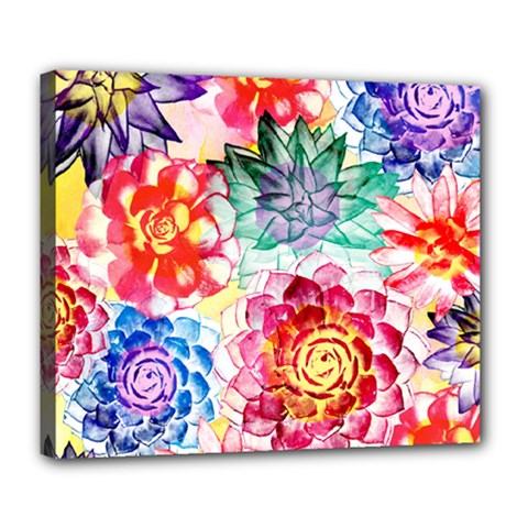 Colorful Succulents Deluxe Canvas 24  X 20   by DanaeStudio