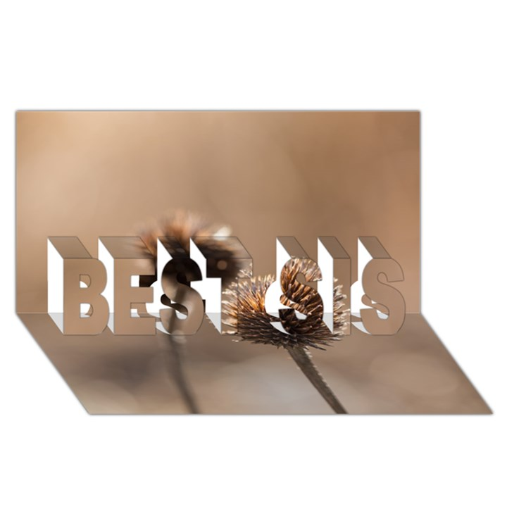 2  Verwelkte Kugeldistel BEST SIS 3D Greeting Card (8x4)