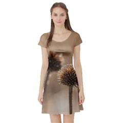 2  Verwelkte Kugeldistel Short Sleeve Skater Dress