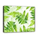 Fern Leaves Deluxe Canvas 20  x 16   View1