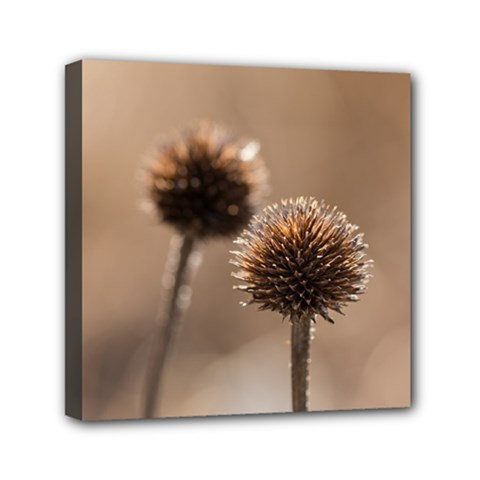 Withered Globe Thistle In Autumn Macro Mini Canvas 6  X 6  by wsfcow