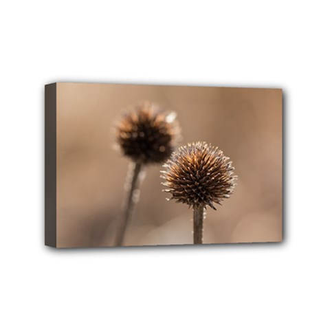 Withered Globe Thistle In Autumn Macro Mini Canvas 6  X 4