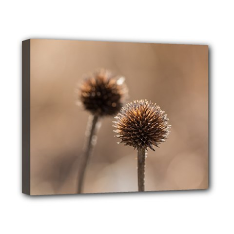 Withered Globe Thistle In Autumn Macro Canvas 10  X 8  by wsfcow