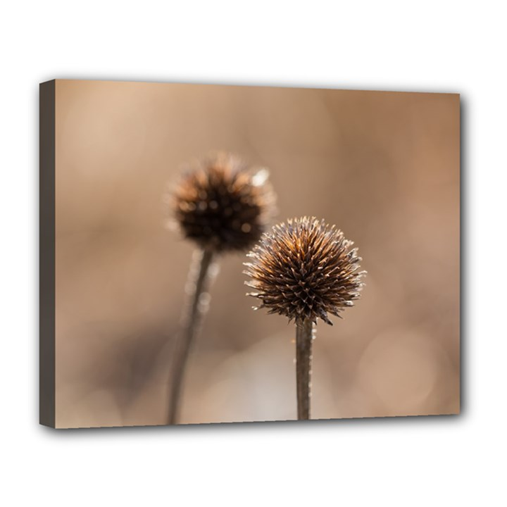 Withered Globe Thistle In Autumn Macro Canvas 14  x 11