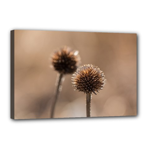 Withered Globe Thistle In Autumn Macro Canvas 18  X 12