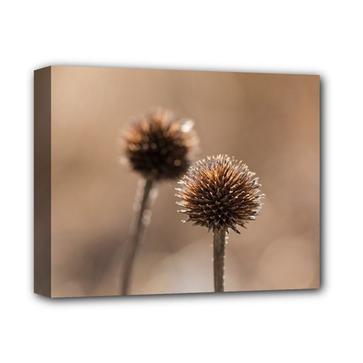 Withered Globe Thistle In Autumn Macro Deluxe Canvas 14  x 11