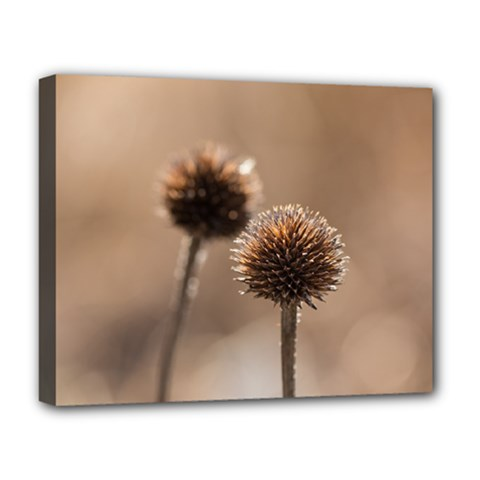 Withered Globe Thistle In Autumn Macro Deluxe Canvas 20  X 16   by wsfcow