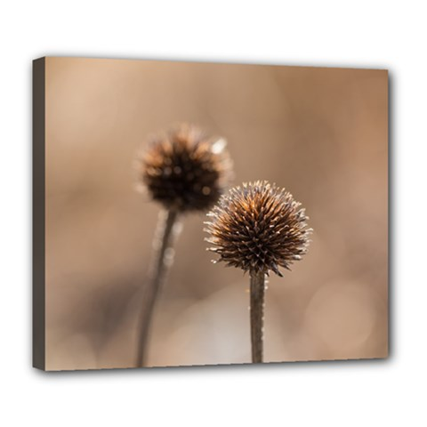 Withered Globe Thistle In Autumn Macro Deluxe Canvas 24  X 20