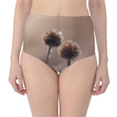 Withered Globe Thistle In Autumn Macro High Waist Bikini Bottoms