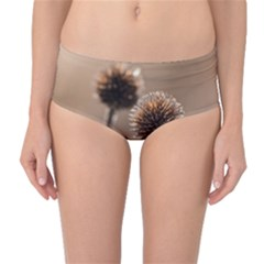 Withered Globe Thistle In Autumn Macro Mid Waist Bikini Bottoms