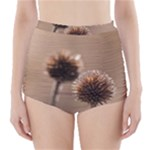 Withered Globe Thistle In Autumn Macro High-Waisted Bikini Bottoms