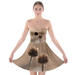 Withered Globe Thistle In Autumn Macro Strapless Bra Top Dress