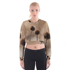Withered Globe Thistle In Autumn Macro Women s Cropped Sweatshirt by wsfcow