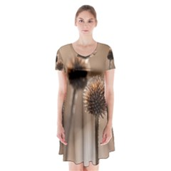 Withered Globe Thistle In Autumn Macro Short Sleeve V Neck Flare Dress