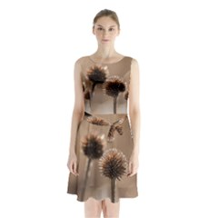Withered Globe Thistle In Autumn Macro Sleeveless Chiffon Waist Tie Dress