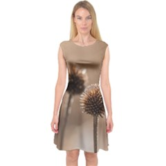 Withered Globe Thistle In Autumn Macro Capsleeve Midi Dress