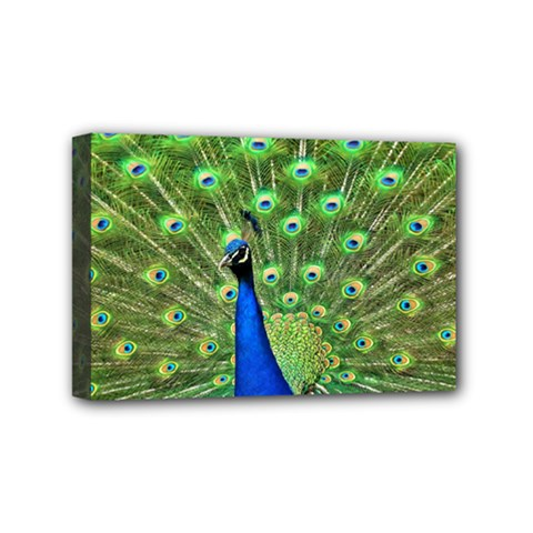 Bird Peacock Mini Canvas 6  X 4
