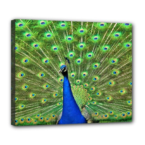 Bird Peacock Deluxe Canvas 24  X 20