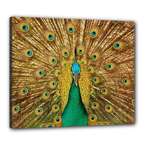 Bird Peacock Feathers Canvas 24  X 20