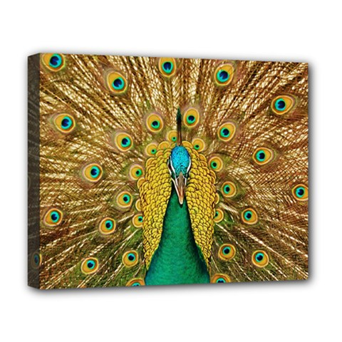 Bird Peacock Feathers Deluxe Canvas 20  X 16