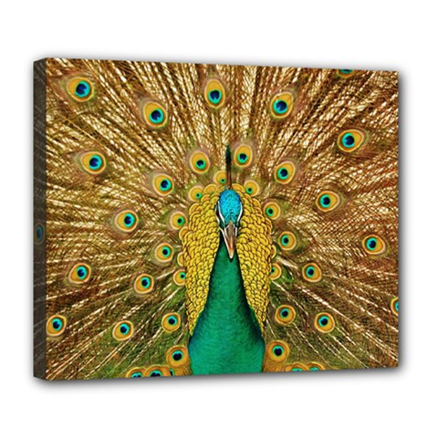 Bird Peacock Feathers Deluxe Canvas 24  X 20