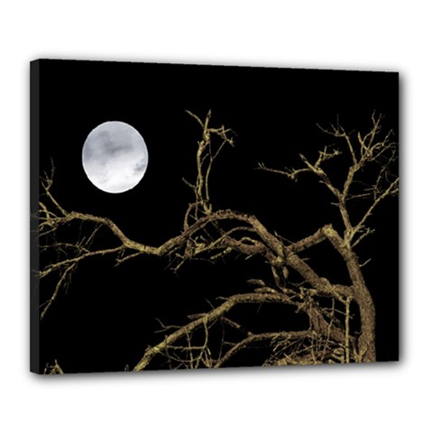 Nature Dark Scene Canvas 20  X 16  by dflcprints