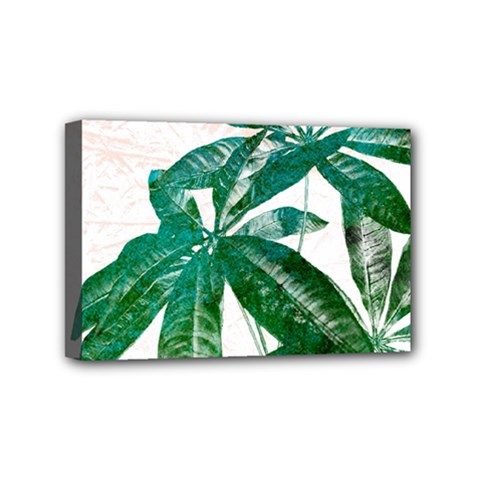 Pachira Leaves  Mini Canvas 6  X 4