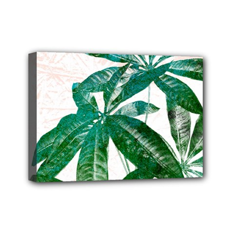 Pachira Leaves  Mini Canvas 7  X 5